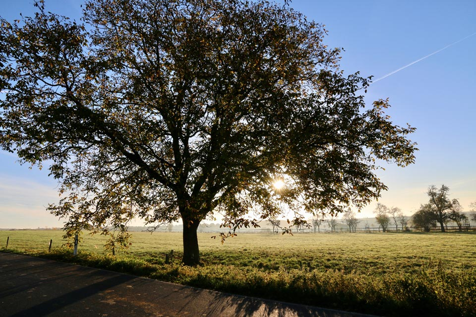 Deciduous or leaf tree