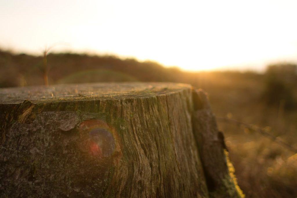 Dawn Nature Sunset Dust